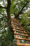 Escalera en un árbol Fotos de archivo