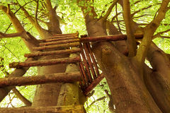 Escalera a la casa del árbol Fotos de archivo