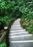 Escalera a la montaña tropical imagen de archivo