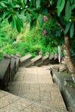 Escalera a la selva Imagen de archivo