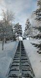 Escalera larga en la cuesta del invierno entre los árboles Foto de archivo