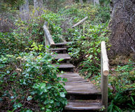 Escalera a los árboles Imagen de archivo libre de regalías