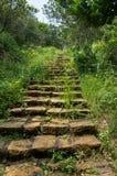 Escalera ocultada en la selva rodeada por la vegetación verde imagen de archivo libre de regalías