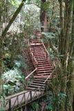 Escalera que entra para arriba el bosque Fotografía de archivo