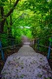 Escalera que lleva abajo a una trayectoria sin embargo un bosque Imagen de archivo