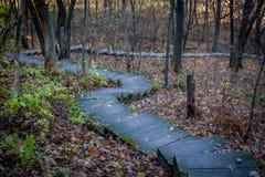 Escalera a través del bosque Foto de archivo
