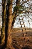 Escalera a un árbol Fotografía de archivo libre de regalías