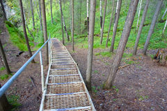Escaleras abajo al bosque del verano Imagenes de archivo