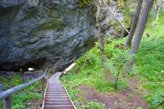 Escaleras abajo al bosque del verano Imagen de archivo libre de regalías