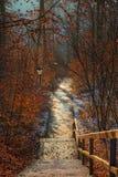 Escaleras abandonadas en el bosque Imagenes de archivo