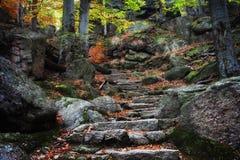 Escaleras antiguas en bosque de la montaña Foto de archivo libre de regalías