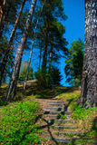 Escaleras, bosque Foto de archivo libre de regalías