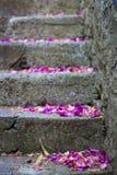 Escaleras con las flores fotos de archivo libres de regalías