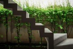 Escaleras concretas flotantes con las plantas verdes y la pared Fotos de archivo