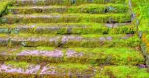 Escaleras cubiertas de musgo viejas Imagen de archivo