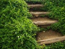 Escaleras de la naturaleza Imagen de archivo