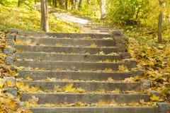 Escaleras de la piedra del bosque del otoño fotos de archivo