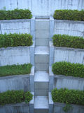 Escaleras de la vegetación foto de archivo libre de regalías