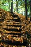 Escaleras de madera Foto de archivo