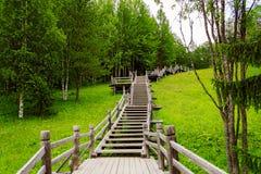 Escaleras de madera en bosque Imagenes de archivo