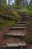 Escaleras de madera en bosque Imagen de archivo