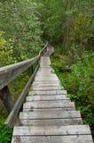 Escaleras de madera en bosque Imagen de archivo libre de regalías