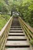 Escaleras de madera en la vertical de la pista de senderismo Foto de archivo libre de regalías