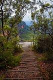 Escaleras de madera en pista de la montaña en arbusto australiano Foto de archivo libre de regalías