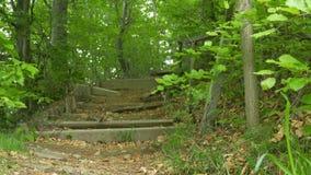 Escaleras de madera quebradas en bosque metrajes