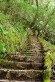 Escaleras de piedra antiguas en el más forrest Imagenes de archivo