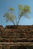 Escaleras de piedra con el árbol Fotos de archivo libres de regalías