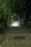 Escaleras de piedra debajo de árboles y plantas en la noche Imágenes de archivo libres de regalías