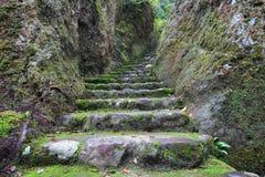 Escaleras de piedra del musgo verde fotografía de archivo libre de regalías
