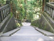 Escaleras de piedra descendentes en un bosque antiguo Imagen de archivo libre de regalías