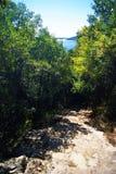 Escaleras de piedra en la arboleda verde del verano Foto de archivo libre de regalías