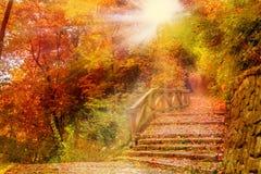 Escaleras de piedra en un parque Fotos de archivo libres de regalías