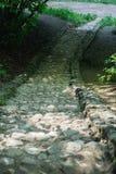 Escaleras de piedra que llevan abajo en el parque Foto de archivo libre de regalías
