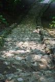 Escaleras de piedra que llevan abajo en el parque Fotos de archivo