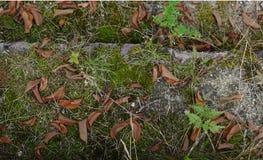 Escaleras de piedra viejas cubiertas con el musgo y la hierba con las hojas caidas secas imagen de archivo libre de regalías