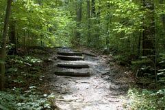 Escaleras del bosque Foto de archivo libre de regalías