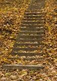 Escaleras del hormigón del otoño Fotografía de archivo