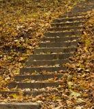 Escaleras del hormigón del otoño Foto de archivo libre de regalías