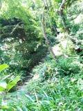 Escaleras del templo Foto de archivo