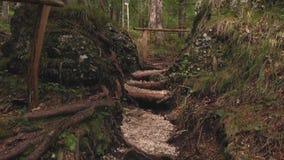 Escaleras en bosque metrajes