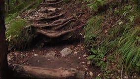 Escaleras en bosque almacen de metraje de vídeo