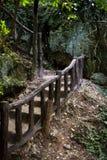 Escaleras en bosque Fotos de archivo libres de regalías