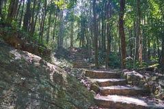 Escaleras en bosque Fotografía de archivo libre de regalías