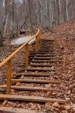 Escaleras en bosque del otoño Fotografía de archivo libre de regalías