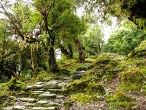 Escaleras en bosque viejo Imagenes de archivo