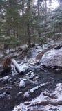 Escaleras en el bosque Imagen de archivo